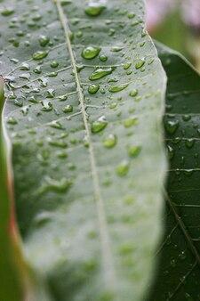 Tropische blad textuur achtergrond