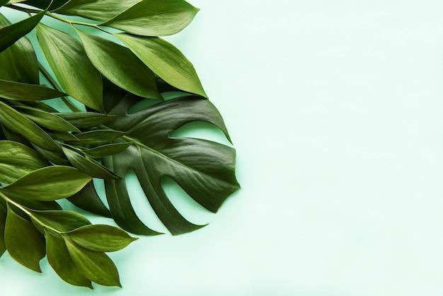 Tropische bladeren en monsterablad