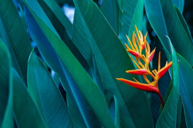 Tropische bladeren kleurrijke bloem op donkere tropische gebladerteaard achtergrond donkergroene gebladerteaard