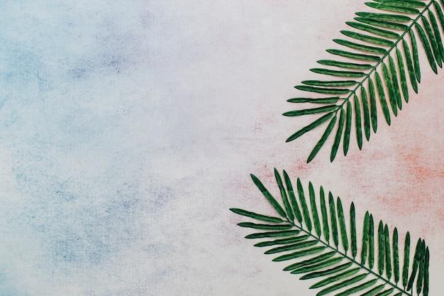 Tropische bladeren met kopie ruimte aan de linkerkant.