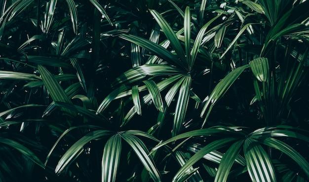 Tropische bladeren met verlichting in donkere toonkleur