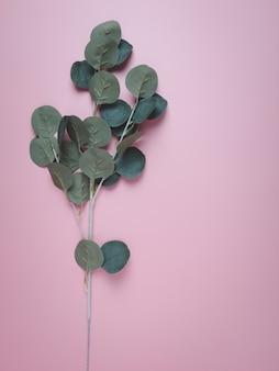 Tropische bladeren meucalyptus op pastel.