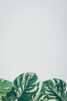 Tropische bladeren monstera op blauwe achtergrond met copyspace