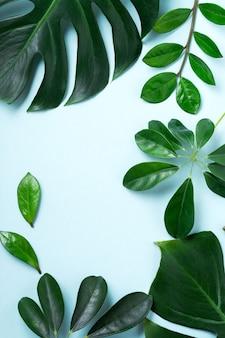 Tropische bladeren monstera op roze achtergrond. blad van groene monstera plant op blauwe achtergrond met kopie ruimte. bovenaanzicht.