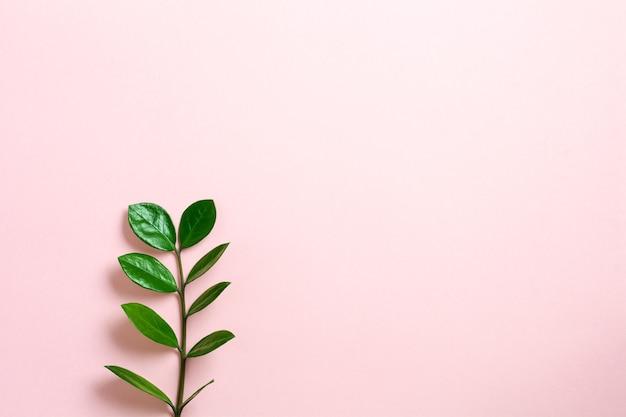 Tropische bladeren monstera op roze achtergrond. blad van groene monstera plant op roze achtergrond met kopie ruimte. bovenaanzicht.