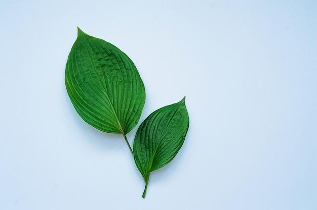 Tropische bladeren op blauwe achtergrond. minimaal natuurconcept. plat leggen.