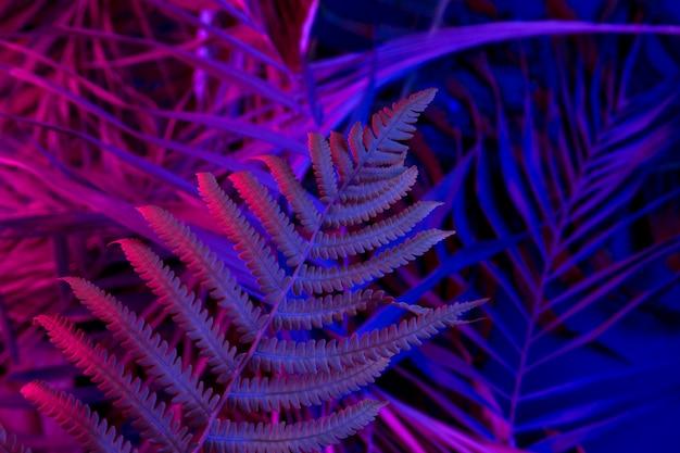 Tropische bladeren op een zwarte lichte achtergrond