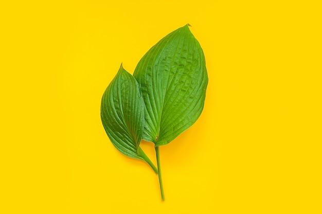 Tropische bladeren op gele achtergrond. minimaal natuurconcept. plat leggen.