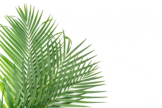 Tropische bladeren op witte achtergrond