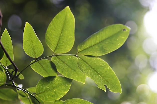 Tropische bladeren textuur achtergrond