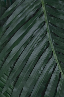 Tropische bladerenclose-up