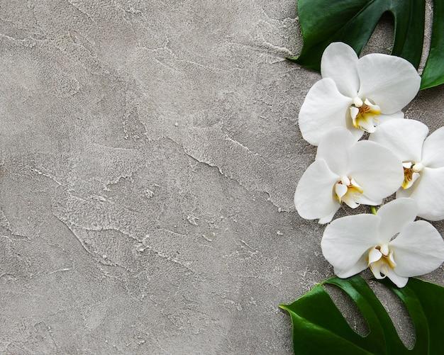 Tropische bladerenmonstera en witte orchideebloemen