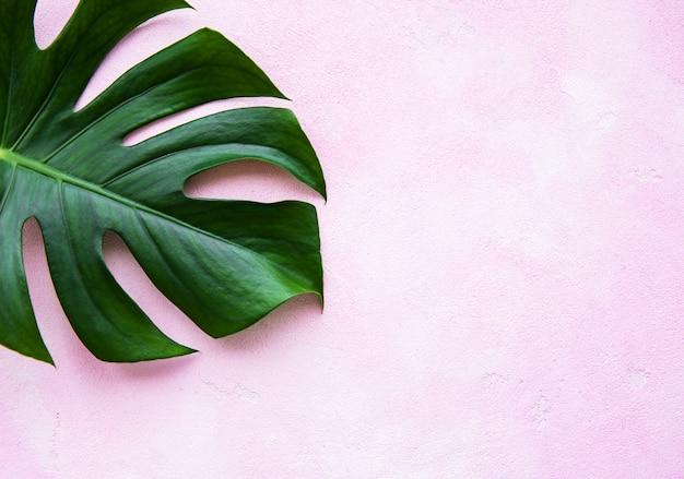 Tropische bladerenmonstera