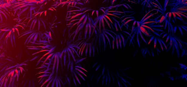 Tropische bladgloed op de zwarte lichte achtergrond.