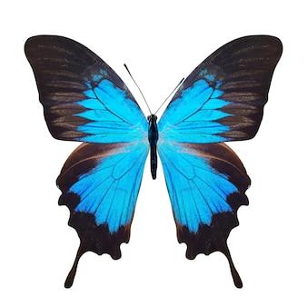 Tropische blauwe vlinder. geïsoleerd op witte achtergrond