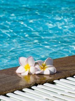Tropische bloem plumeria op zwembad