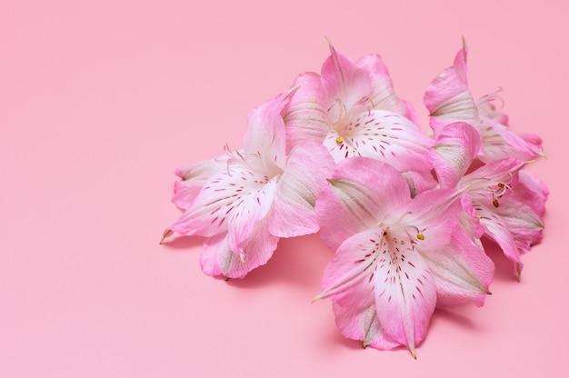 Tropische bloemen op een roze achtergrond. delicate roze bloemen.
