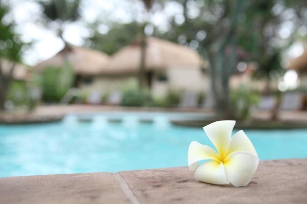 Tropische bloemen zwembad