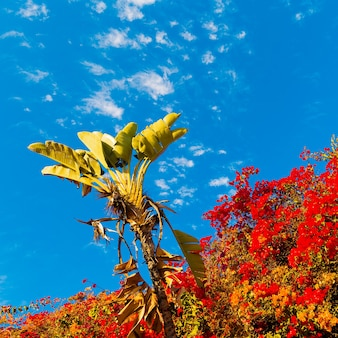 Tropische bloemenachtergrond. minimal art design