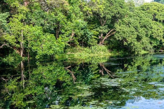 Tropische boom op een meer met reflectie, tanzania, afrika
