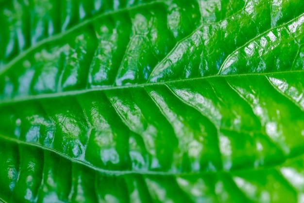 Tropische de aard groene achtergrond van de bladtextuur.