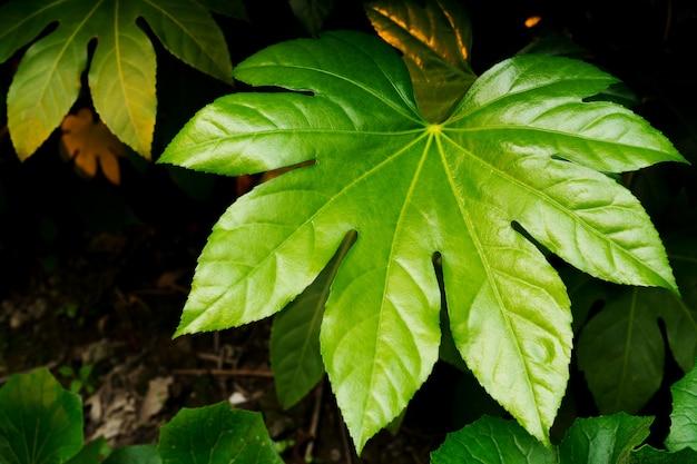Tropische de textuurachtergrond van het aard groene blad