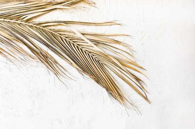Tropische droge palmbladeren op witte muur