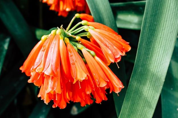 Tropische exotische bloem close-up onder bladeren