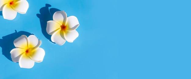 Tropische frangipanibloemen op een blauwe waterachtergrond. bovenaanzicht, plat gelegd. banier.