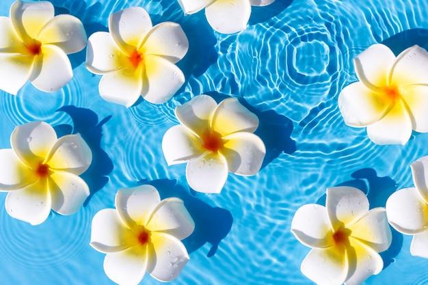 Tropische frangipanibloemen op een blauwe waterachtergrond. bovenaanzicht, plat gelegd.