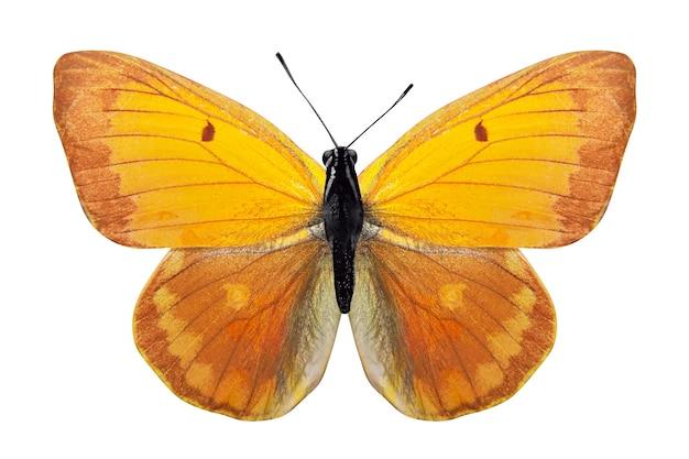 Tropische gele vlinder. geïsoleerd op een witte achtergrond