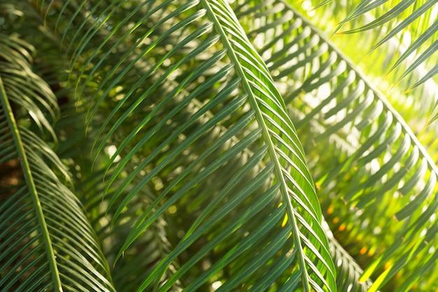 Tropische groenblijvende planten in botanische tuin