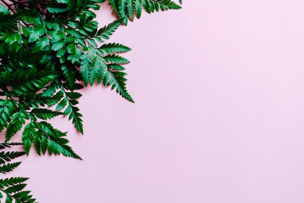 Tropische groene bladeren op kleur