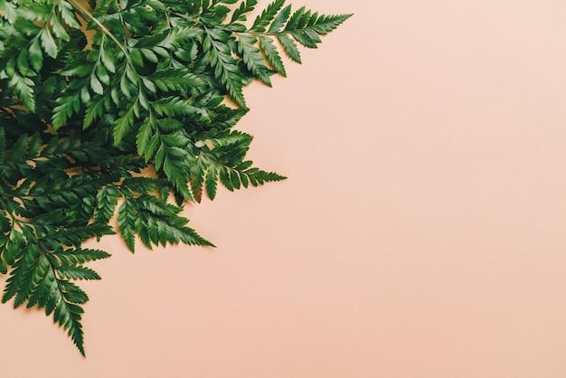 Tropische groene bladeren op kleurenachtergrond