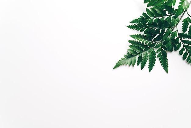 Tropische groene bladeren op kleurentabel