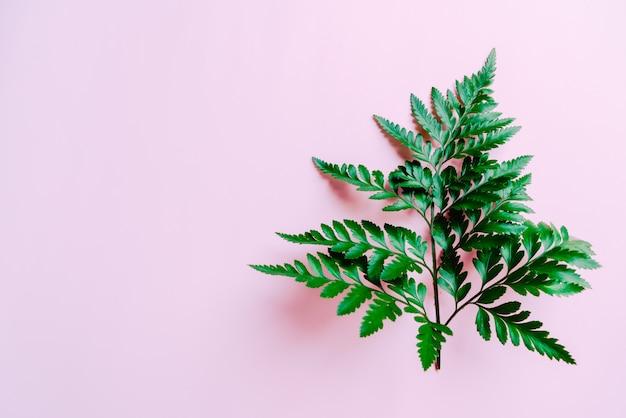 Tropische groene bladeren op roze copyspace