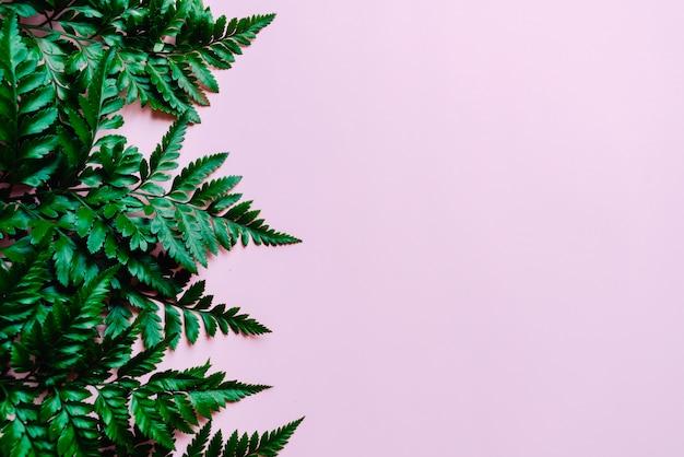 Tropische groene bladeren op roze copyspaceachtergrond