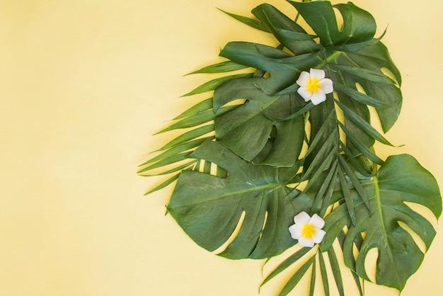 Tropische groene bladeren palm achtergrond