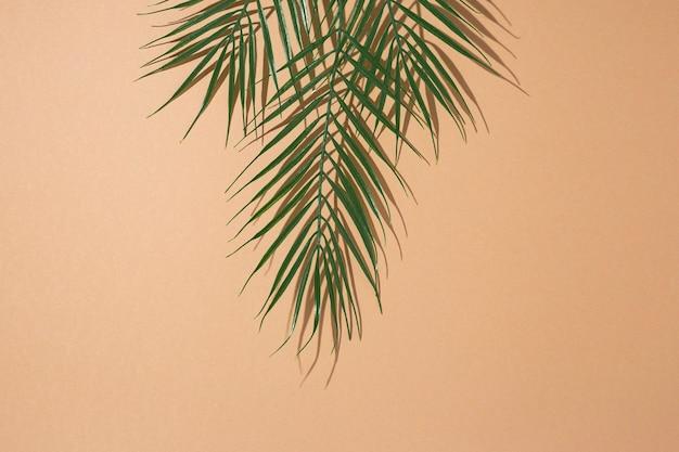 Tropische groene bladeren van palmboom op bruine achtergrond. bovenaanzicht, plat gelegd.