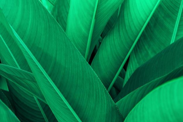 Tropische groene bladtextuur, groene bladerenachtergrond natuur donkergroene achtergrond, conceptenaard en tropische installatie