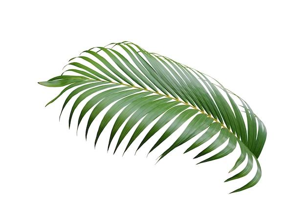 Tropische groene palm blad boom geïsoleerd op wit