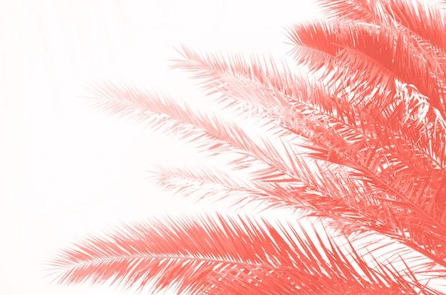 Tropische groene palmbladen en takken op koraalkleur. zonnige dag, zomer concept. zon over palmbomen. reizen, vakantie achtergrond.