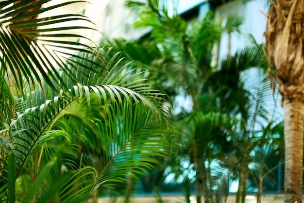 Tropische groene palmbomen