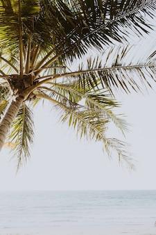 Tropische groene palmboom op mooi strand met blauwe zee