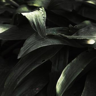 Tropische het grasbladen van de close-up