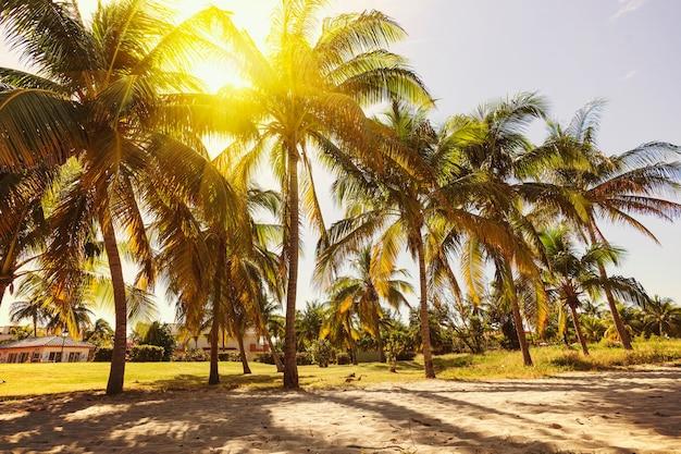 Tropische huizen en kokospalmen op een zandstrand in de buurt van de zee in zonnige dag op het eiland
