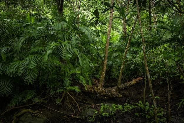 Tropische jungle, tropisch regenwoud met verschillende bomen.
