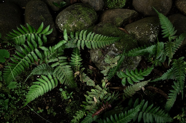 Tropische jungle vegetatie bovenaanzicht
