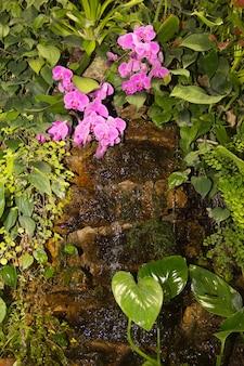 Tropische kleine waterval tussen groene planten en roze orchideeën tropische stroom