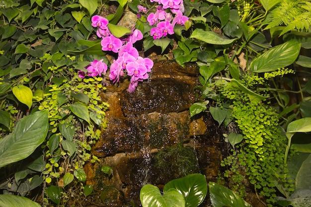 Tropische kleine waterval tussen groene planten en roze orchideeën